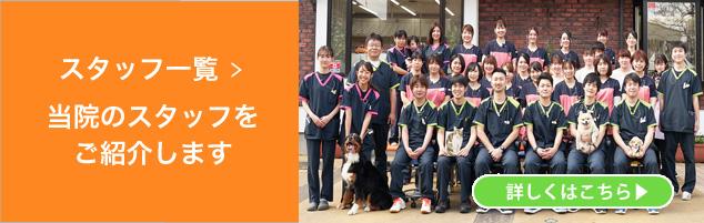 獣医師・動物看護師(AHT)・トリミングサロンなど犬猫専門スタッフ一覧