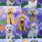 20181101トリミング犬猫集合写真002