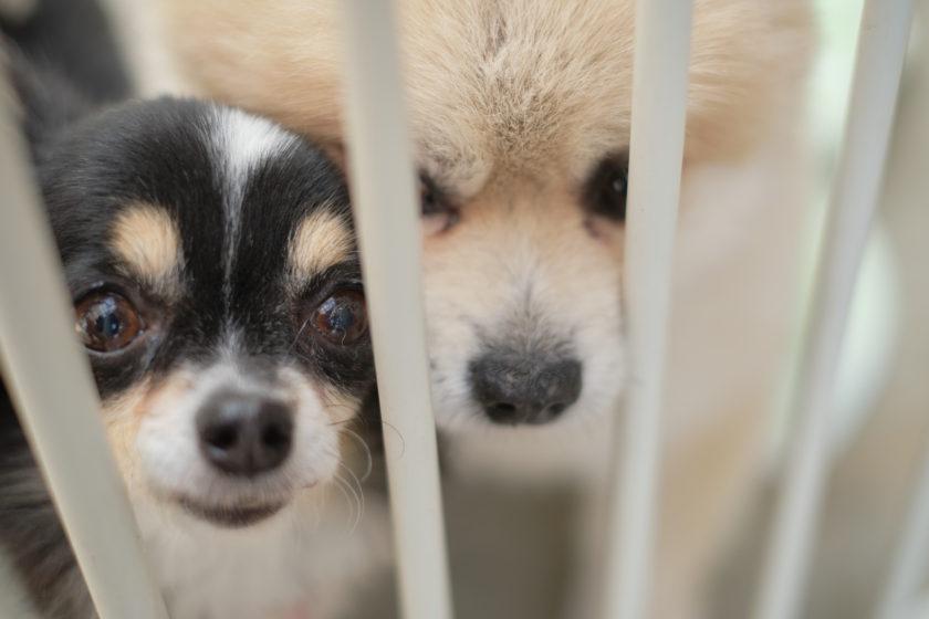 20210403たぐち動物医療センター看板犬